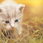 L'hygiène du bac à litière de votre chat est primordiale